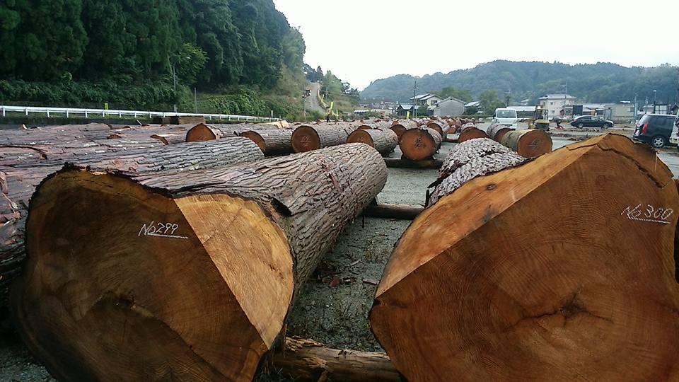 北村林業の秋の記念市(3)