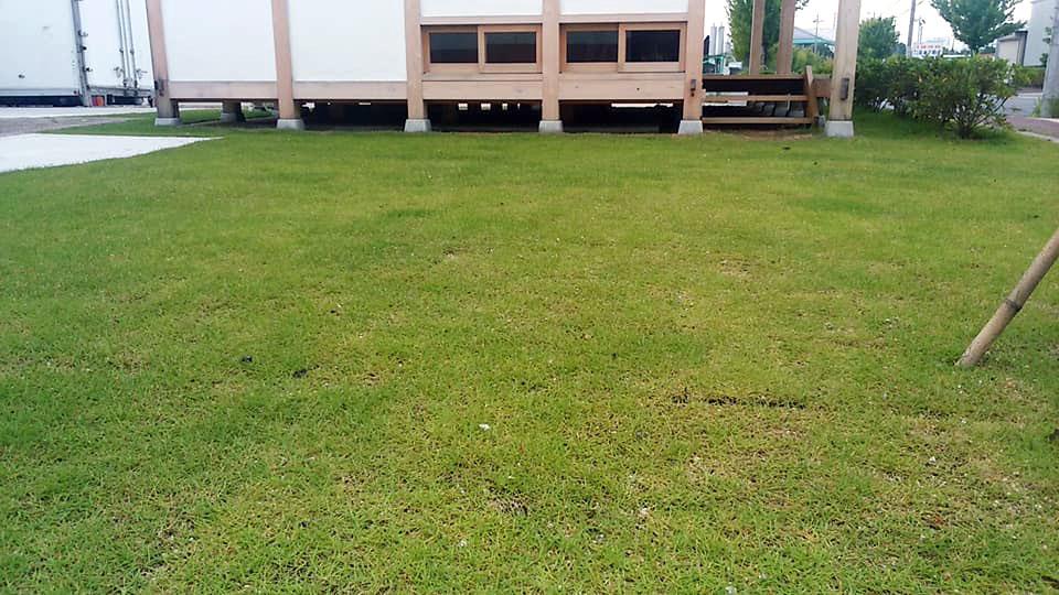 芝の緑が映えてます(2)