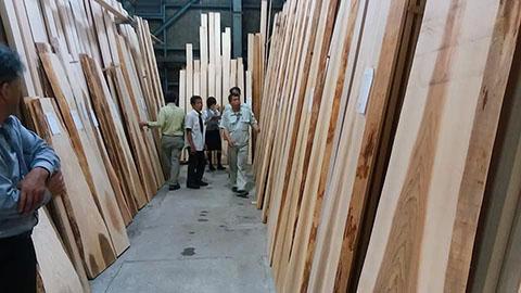 杉の杢板ゲット