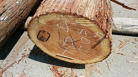 最高の吉野杉です