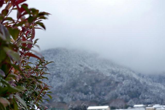 昨日から大雪4