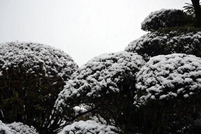 またまた大雪(奈良県)2