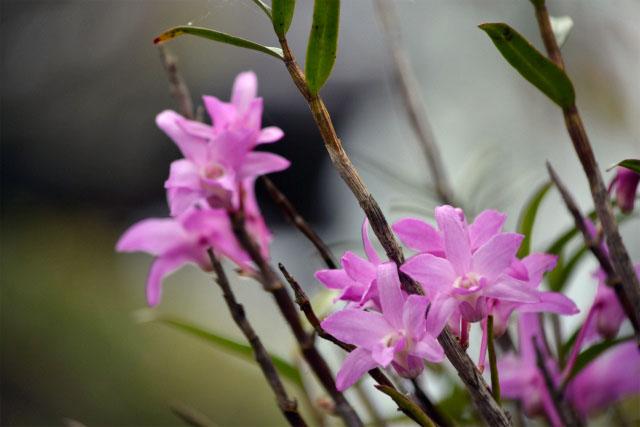 連休中の花1