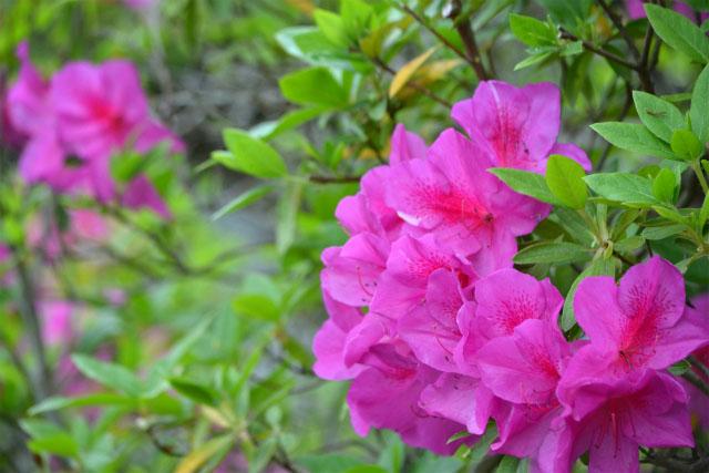 連休中の花2