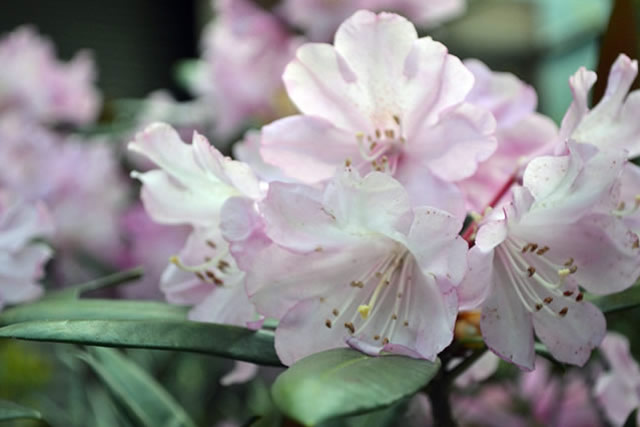 五月後半の花たち1