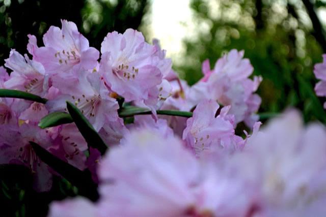 五月後半の花たち2