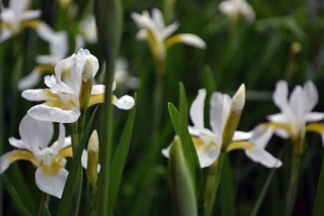 五月後半の花たち3