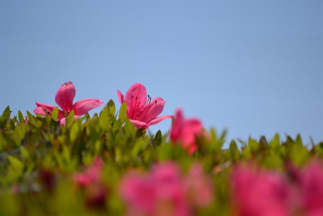 ブラシの花(1)