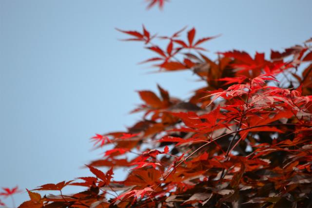 ブラシの花(2)