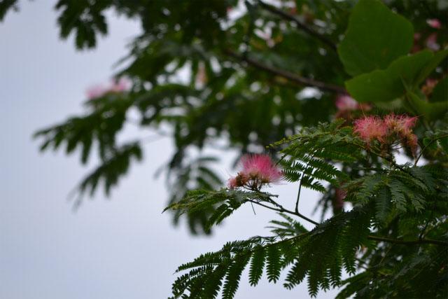 ねむの木(1)