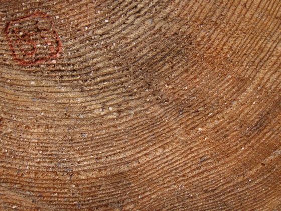 吉野杉の木01
